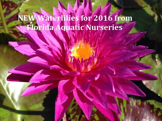N. Valentine. Image used with the permission of Florida Aquatic Nurseries