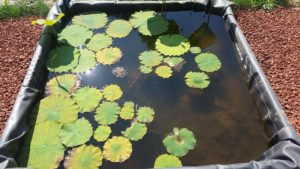Space 36 Lotus Pond