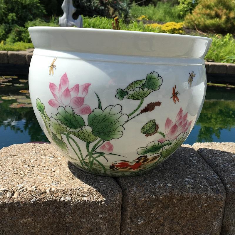 Chinese bowl lotus pot beautiful lotus h bergen water for Lotus plant for sale