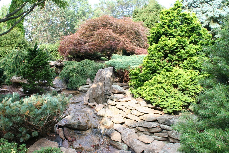 Dwarf conifers around your pond in your garden bergen for Landscaping around a small pond