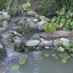Pond at Bergen Water Gardens