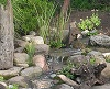 New Display Pond at Bergen Water Gardens Sept. 2014
