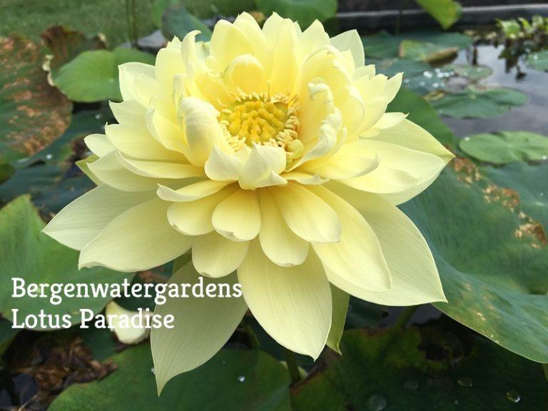 Autumn in Moling Lotus