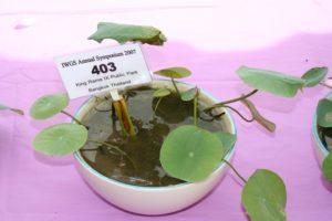 Thai Bowl Lotus