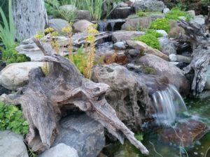 Driftwood Bergen Water GArdens