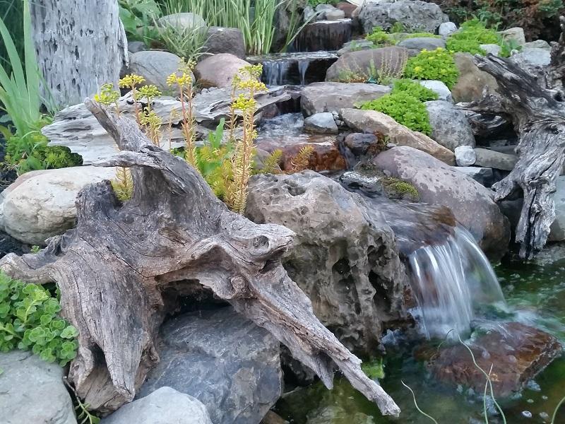 Lovely Driftwood Bergen Water GArdens
