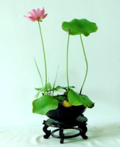 Chinese Bowl Lotus