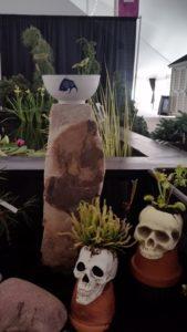 Traps and Cape Sundew plus Bowl Lotus