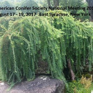 American Conifer Society National Meeting