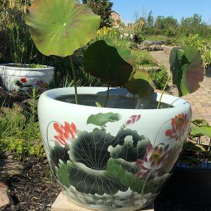 Chinese lotus Pot- New Lotus (M-6)