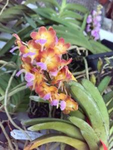 Stunning Thai Orchids
