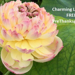 Thanksgiving Offer Free Charming Lips Lotus