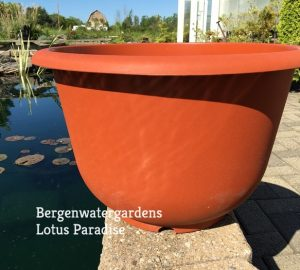 Trio of Medium Lotus Plastic pot