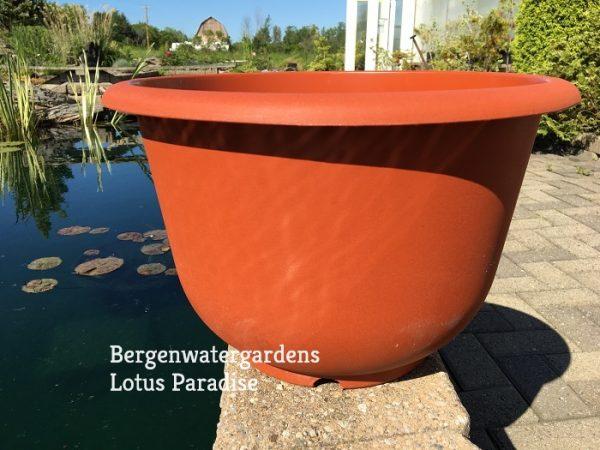 Trio of Medium Lotus Plastic pot