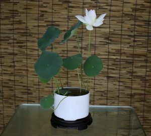 Micro Lotus