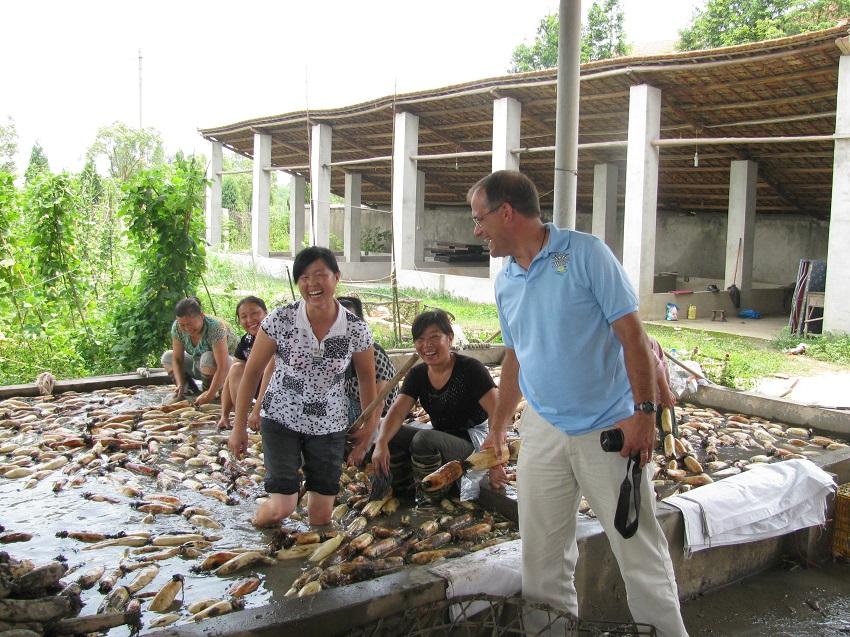 Chinese lotus tuber