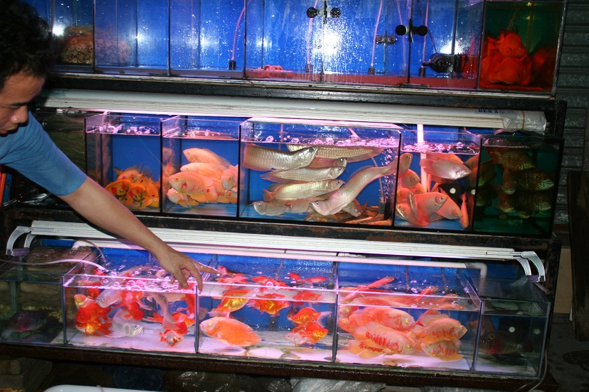 Guangzhou Pet Fish Market