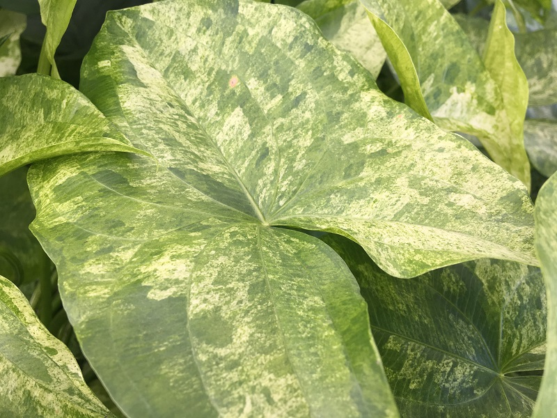 Marginal Plant