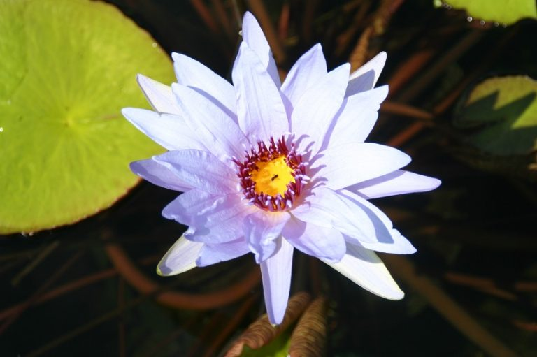 N. Wood's Blue Goddess