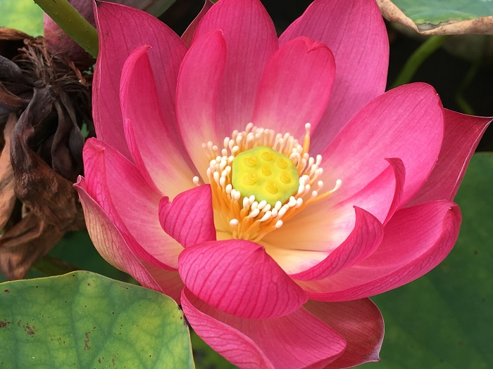 Colorful Lantern in Qinhuai Lotus