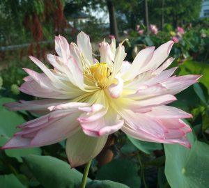 Filament Lotus